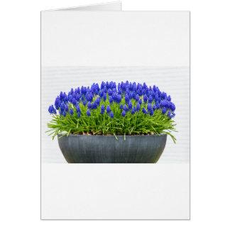 Grey metal flower box with blue grape hyacinths card