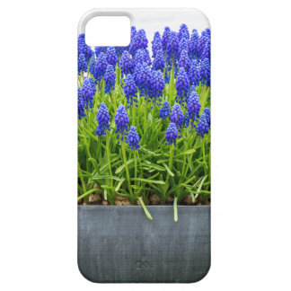 Grey metal flower box with blue grape hyacinths case for the iPhone 5