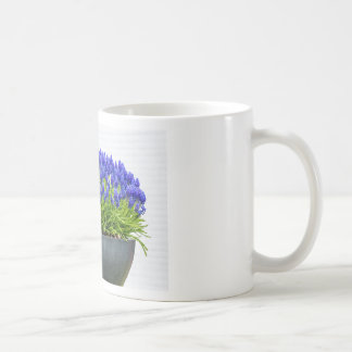 Grey metal flower box with blue grape hyacinths coffee mug