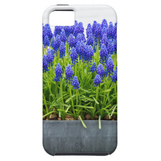 Grey metal flower box with blue grape hyacinths iPhone 5 cover
