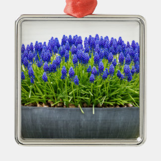 Grey metal flower box with blue grape hyacinths metal ornament