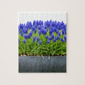 Grey metal flower box with blue grape hyacinths puzzles