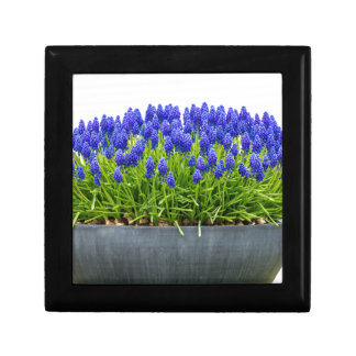 Grey metal flower box with blue grape hyacinths small square gift box
