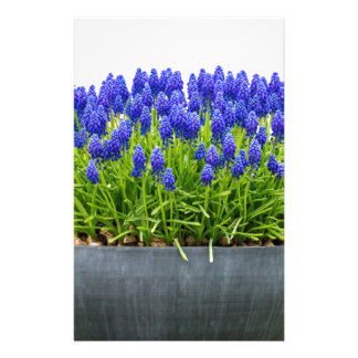 Grey metal flower box with blue grape hyacinths stationery