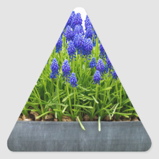 Grey metal flower box with blue grape hyacinths triangle sticker