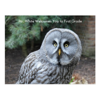 Grey Owl Welcome Students Custom Postcard