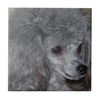 Grey Poodle Tile