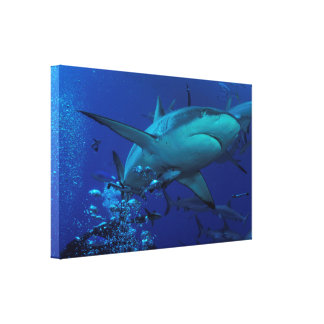 Grey Reef Shark Wrapped Canvas