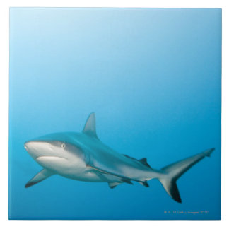 Grey reef sharks (Carcharhinus amblyrhnchos) Large Square Tile