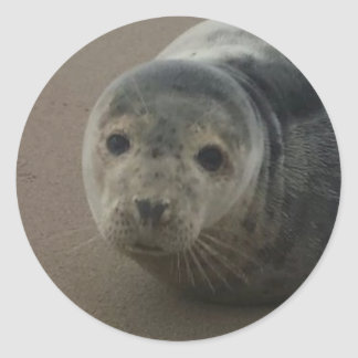 Grey seal adorable pup baby round sticker