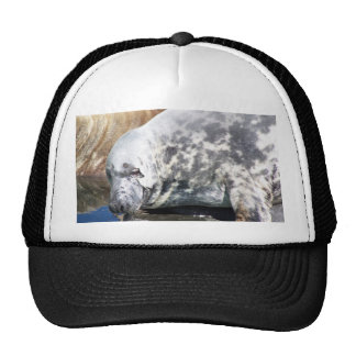 Grey Seal Close Up Portrait Trucker Hats