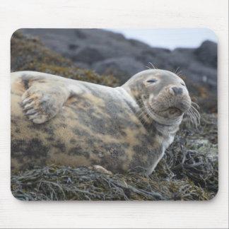 Grey Seal Mouse Pad
