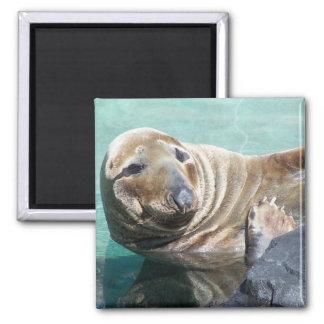 Grey Seal Portrait Square Magnet
