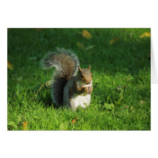 Grey Squirrel, Bute Park, Cardiff Greeting Card