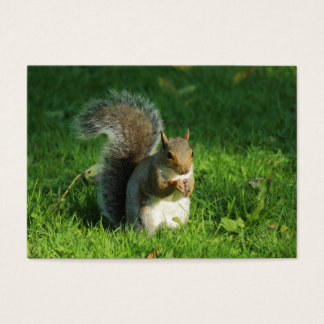 Grey Squirrel Eating Nuts, Bute Park, Cardiff