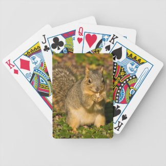 Grey Squirrel, eating, peanut, Crystal Springs 1 Bicycle Playing Cards