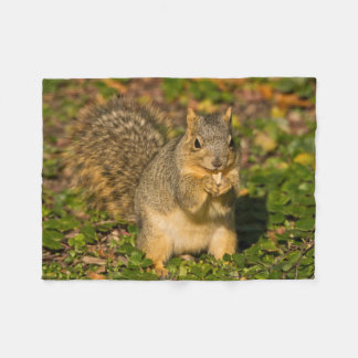 Grey Squirrel, eating, peanut, Crystal Springs 1 Fleece Blanket