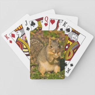 Grey Squirrel, eating, peanut, Crystal Springs 1 Playing Cards