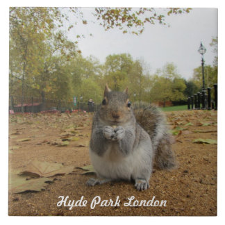 Grey Squirrel Hyde Park London. Large Square Tile