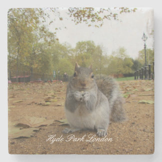 Grey Squirrel Hyde Park London. Stone Coaster