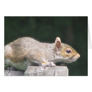 Grey Squirrel on fence post Greeting Card