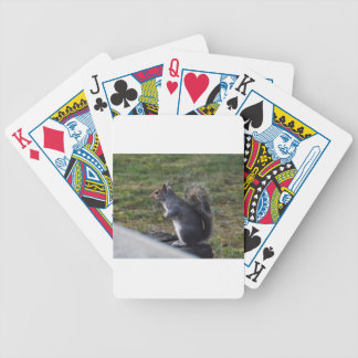 Grey Squirrel Poker Deck