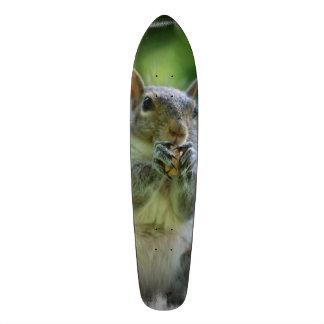Grey Squirrel Skate Boards