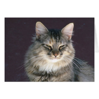 Grey Tabby Cat Note Card