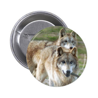 grey-wolf2-10x10 pinback buttons