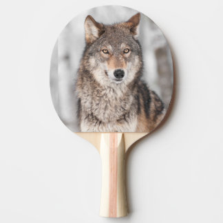 Grey Wolf (Canis lupus) With One Ear Back Ping Pong Paddle