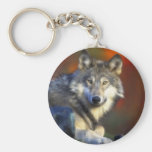 Grey Wolf, Endangered Species Digital Photography Basic Round Button Key Ring