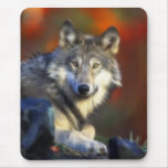 Grey Wolf, Endangered Species Digital Photography Mouse Pads