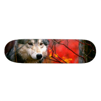 Grey Wolf in Beautiful Red and Yellow Foliage 18.4 Cm Mini Skateboard Deck