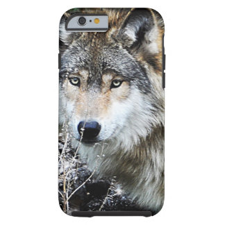 Grey Wolf iPhone 6 case Tough iPhone 6 Case