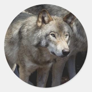 Grey wolf standing classic round sticker