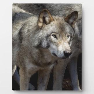 Grey wolf standing plaque
