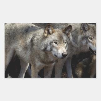 Grey wolf standing rectangular sticker