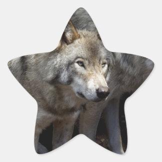 Grey wolf standing star sticker