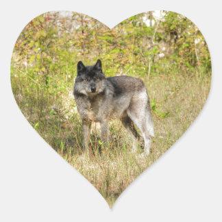 Grey Wolf & Wilderness Photo Gift Heart Sticker