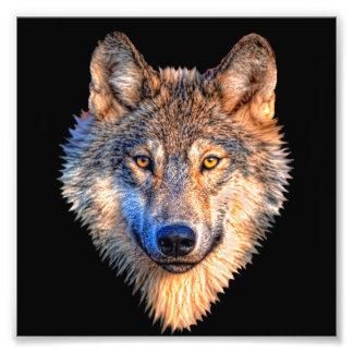 Grey wolf - wolf face photo print