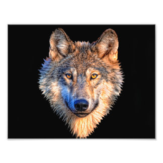 Grey wolf - wolf face photo print