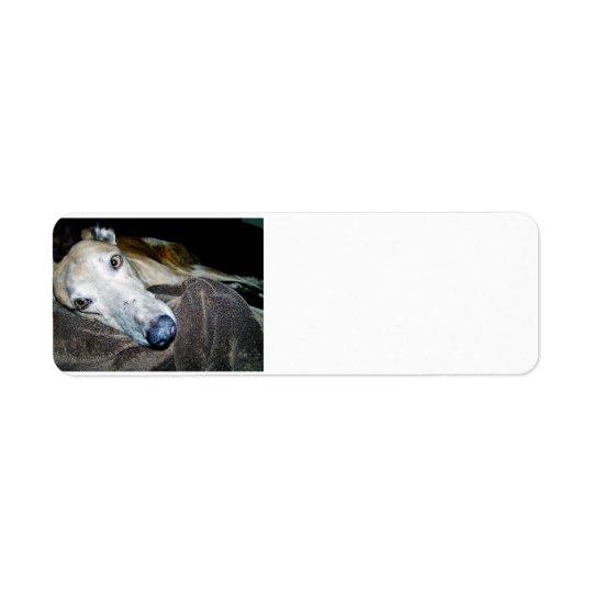 greyhound 2.png return address label