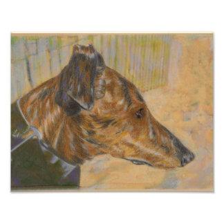 Greyhound at the beach photo print