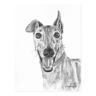 Greyhound Closeup Drawing Postcard