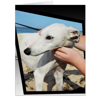 Greyhound Dimensions Big Greeting Card