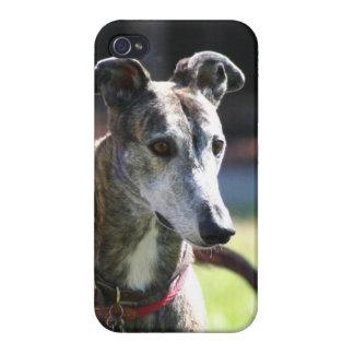 Greyhound dog iPhone 4/4S case