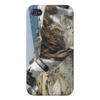 Greyhound Dog iPhone Case iPhone 4 Case