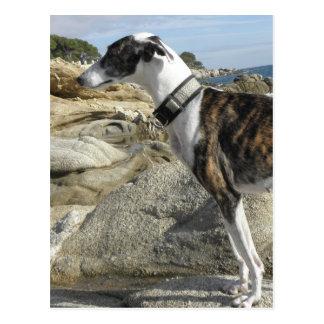 Greyhound Photographs Postcard
