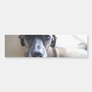 Greyhound Puppy Bumper Stickers