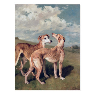 Greyhounds Postcard